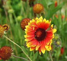 Potala Flower by PerkyBeans