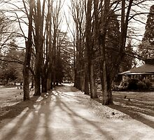 Cooks Park Path by Steven Cousley