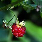 Last Berry On The Bush by lynn carter