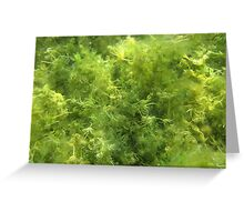 Underwater Vegetation 515 Greeting Card