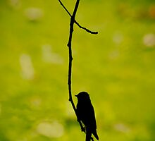 bird on a wire by kevin  caldwell