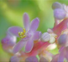 Tiny Pastel by Chet  King