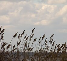 Beach Grass by jeffreynelsd
