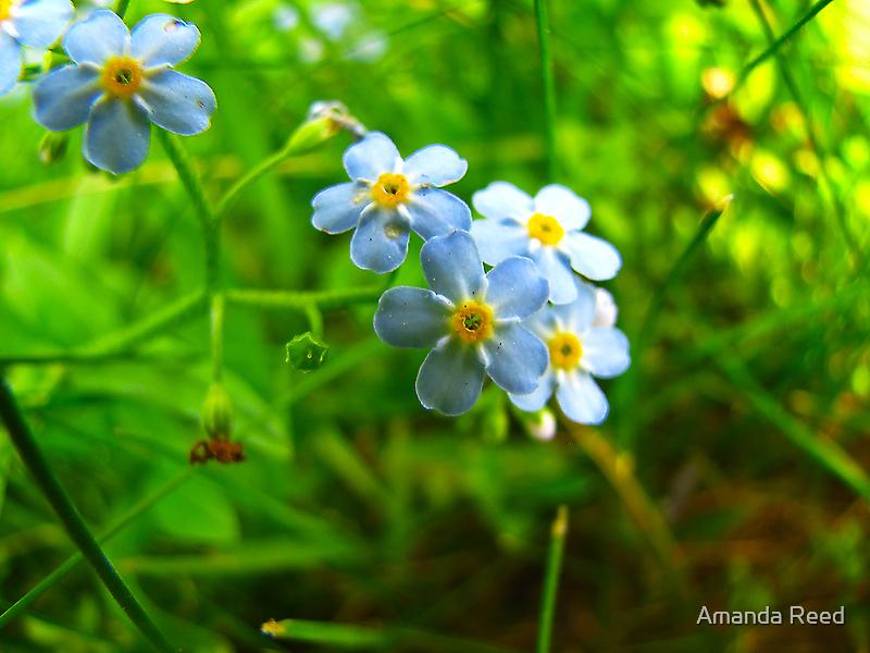Blue Bunch by Amanda Reed