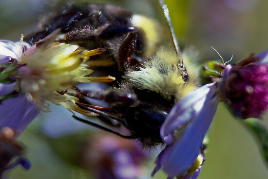 Hungry Little Bee by Amanda Reed