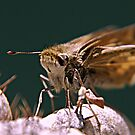Moth by saseoche