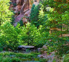 Canyon Spring by BGSPhoto