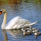 Adult Swan and Cygnets by youmeus