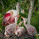 Mama Roseate and Babies by Bonnie T.  Barry