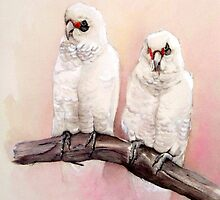 Who's the Prettiest? Little Corellas by Jacqui Cleijne