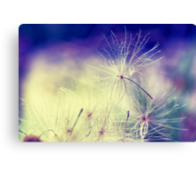 Thistle Seeds Canvas Print