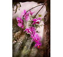 Orchid - Tropical Passion Photographic Print