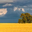 Tree in Field  by Iain Mavin