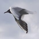Seagull Flying Past by JenaHall