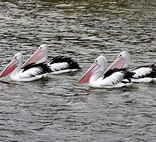 The Pelicans came in 2X2 by Nikki25