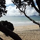 Through the trees - Langs Beach by amypie71