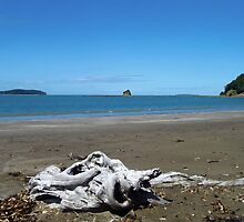 Driftwood on the beach at Sullivans Bay by amypie71