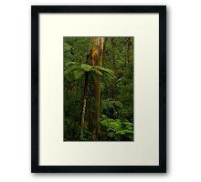 Rain Forest. Framed Print