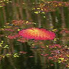 a water lily leaf by Sue Downey
