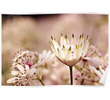 swiss cottage flowers Poster