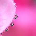Pretty in Pink by PhotoTamara