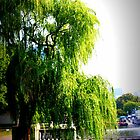 Weeping Willow by the Charles River by Amanda Vontobel Photography