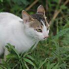 Wild Cat by Jerry Dorado Alcantara