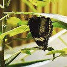 Butterfly Hanging On a Leaf by ThinkPics