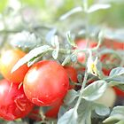 Tomaten by Chelsea Wildner