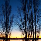 Poplars at Dusk by Tim Coleman