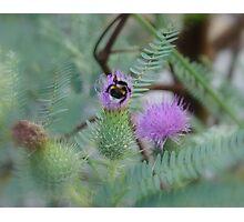 Nature of NZ Photographic Print