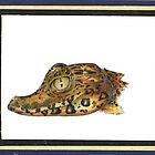 Baby Gator Drawing by John Symonette