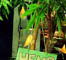 Hemp! by Andrea Morris