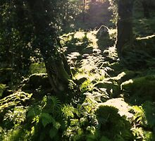 Burrator Wood, Dartmoor by Barnaby Edwards