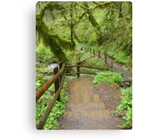Go Where The Path Leads Canvas Print