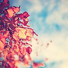 My Secret Garden (Vintage pink autumn leafs and blue sky) by Andreka