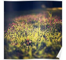 Little violet flowers on the meadow (Vintage and Retro nature Photography) Poster