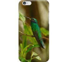 Sparkling Violeteared Hummingbird-Case iPhone Case/Skin