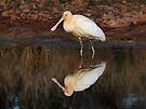 Yellow-billed Spoonbill taken at Byrock Rockpools by Alwyn Simple