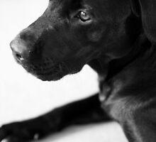 Dogs - Black Labrador by Lynn Ede