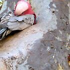 14/8 a galah  by Evelyn Bach