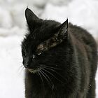 Black Cat, White Snow - FeralKittens.Org by Pagani