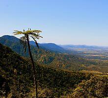 Eungella,  Queensland. Australia. by Margaret Stanton