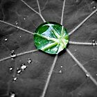 Single Green Raindrop by lindsycarranza