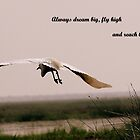 FLY HIGH by PALLABI ROY