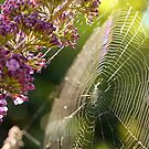 Buddleja and Web by Astrid Ewing Photography