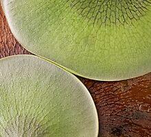 Botanical abstract by Celeste Mookherjee
