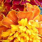 Orange Marigold Flowers! by SpikeyRose