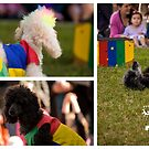 Carnival Of Wonder - Circus Dogs by reflector