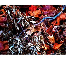 Shimmer Shimmy Photographic Print